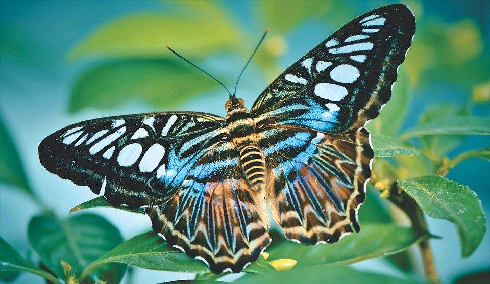 butterfly-4089197_960_720